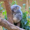 秋の東山動植物園(2)コアラの○○は受験生のお守り?
