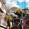 横浜石川町の諏訪神社の桜2019