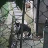 マシュマロ対ネコ