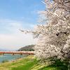 【角館の桜/おすすめの穴場2019】武家屋敷、桧木内川堤の混雑を避けて満開の桜を楽しむならココ!最高の景色を堪能できますよ^^