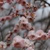 智光山公園に写真を撮りに行ってきた!植物編