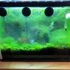 水槽に湧いた藻を解消するために、照明の明るさを抑えてみることにしました。