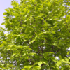 植物さん・新緑、地球さん益々元氣に綺麗に。♪♪♪