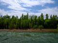 豊平川沿いをサイクリングしながら生き物探し