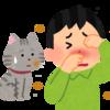 猫に触れたい!抱っこしたい!!猫アレルギーを抑える6つの対処法