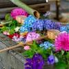 京都・東山 - 双頭蓮の花開く 東福寺勝林寺