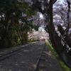 京都の蹴上インクラインで桜を見る
