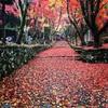 滋賀へ メタセコイヤ並木と鶏足寺に行ってきました。
