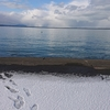 11/29 第49ラウンド 6:30~12:30 石狩湾新港花畔 ガスタンク横 気温-3度~0度 本日もカワガレイ2匹
