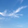 天上の飛翔画。