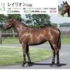 【キャロットクラブ2021募集馬】尺・歩様・動きを評価!(44)▶︎(59)【第二のリスグラシューに出資したい…】