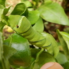 食草・植樹と虫の関係【身近な食草と観察できる昆虫を紹介】