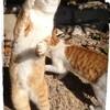 ネコ部長のいかり爆弾…5秒前