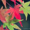 今までと違うアプローチで紅葉撮影をしてみました。昭和記念公園にて。