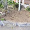4月☆宿根・多年草の花壇