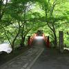 京都 青モミジの三尾名刹の西明寺