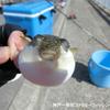 【餌取り魚】防波堤&港内で釣れる餌取りと外道とは @どの位知ってますか?