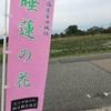 安田城跡で睡蓮の花鑑賞