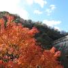 神戸市中央区葺合町  布引貯水池  紅葉が見頃でした。