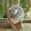 ②オーストラリアへ留学!おすすめ都市比較!~ブリスベン~