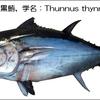クロマグロ漁獲量が上限突破し、6月末までに禁漁〜水産資源回復のために