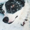 犬に暖房は必要!犬の毛の種類と年齢を考慮してくださいね。