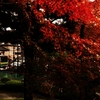 北鎌倉 午後4時の紅葉