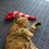 3月後半の #ねこ #cat #猫 どらやきちゃんB