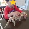 【恐竜の工作】これ100円?セリアの秀逸ウッドクラフトに大興奮。こどもと一緒に自宅を博物館にしよう
