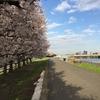 自転車通勤と桜の季節 自転車の盗難防止にワイヤーロック