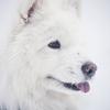 愛犬ポートレート「JOB」