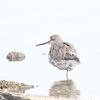 今日の探鳥(瓢湖・新潟市北区)