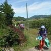 ブルーベリー農園の様子183 東広島市豊栄町