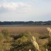 冬鳥の飛来地を訪ねてー伊豆沼・内沼その1