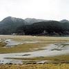干潮時は陸続き、島のサル「移住」防止に監視員
