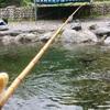 【奥多摩で渓流釣り】大丹波(おおたば)川国際虹マス釣り場でニジマス爆釣