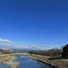 この冬も鴨川のユリカモメ