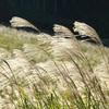 風の木10月の予定 &シンギング・リンクリアリング 瞑想会・味噌作りたい会ご報告とお礼