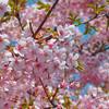 春だ!桜だ!カラオケだ!花見カラオケで歌いたい歌8選