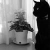 うちの猫の横顔が綺麗だから見てほしい
