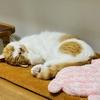 愛猫からのモーニングコールがなかった衝撃の日。