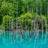 6月の美瑛の風景たち~青い池・美瑛川・親子の木・クリスマスツリーの木・美馬牛の農道~