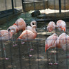 寺と神社と動物園、、、川崎夢見ヶ崎動物公園