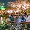 仕事で昼桜と夜桜の撮影してみた『岡崎城下お花見桜まつりの写真』