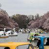 桜散歩 井の頭公園