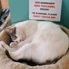 ミラノの猫好き達に捧ぐ、猫カフェ