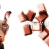 【ドーベルマンと誤飲事故】※2月は犬の誤飲事故多発月です。