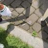 「札幌はキレイな街」と部長さんも仰せ #Ingress の仲間と初めてのゴミ拾いに挑戦