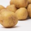 初心者が『1年前のジャガイモ』を種芋にして育成してみた - 植え付け編 -