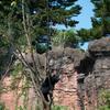 ニホンツキノワグマ Ursus thibetanus japonicus